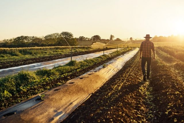 The 8 Lessons Entrepreneurs Could Learn From Farmers