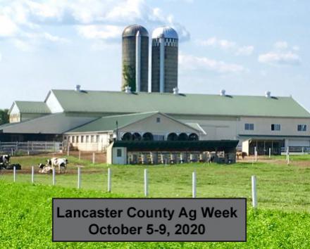 Farm-cows-NEW-1024x355